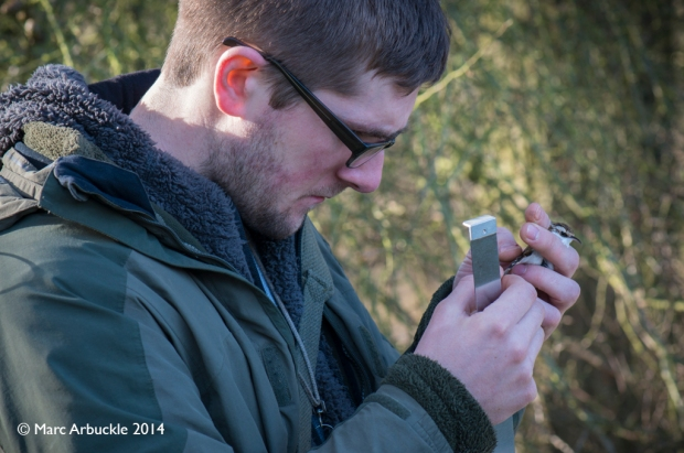 Steve carefully checking the wing feathers to see if the Treecreeper, Certhia familiaris is an adult or juvenile