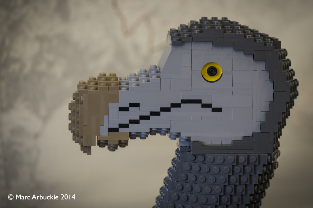 Detail of lego dodo